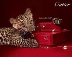 Cartier, collection Les Must