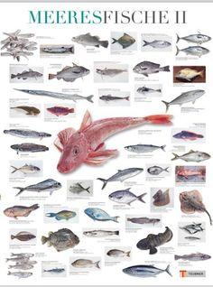 Meeresfische II (Teubner Poster) null http://www.amazon.de/dp/B004ZINV2C/ref=cm_sw_r_pi_dp_GhTfwb0VBBJYD
