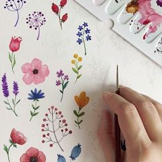 Illustrations Sharing Page ( Watercolor Cards, Watercolor Flowers, Watercolor Paintings, Watercolors, Plant Drawing, Painting & Drawing, Flowers Draw, Floral Illustrations, Illustration Art