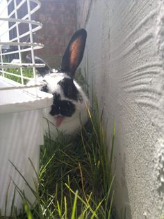 Bunny does her Gene Simmons impression - May 14, 2012