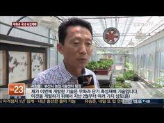 아열대 무화과 국내서 10개월 만에 수확 [부산] - YouTube