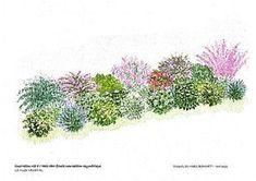 Kit haie libre fleurie mixte composition asymétrique sur le Mur Végétal