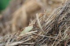 Texture & Time #nest