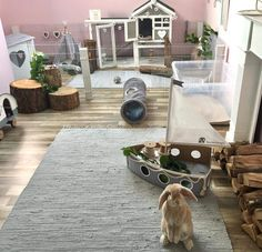 591 Best Great Rabbit Home Ideas Images In 2019 Rabbit
