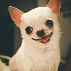 That is such a wonderful expression! I would die for this little dog…
