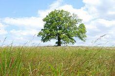 Pride and Prejudice tree