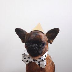 Gizmo le chien grincheux