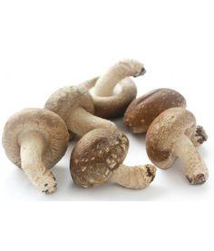 Shiitake - im Internet bestellbare Pilzbrut für die Pilzzucht
