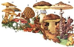 Guide to common fungi    Via Smart Chicks Commune