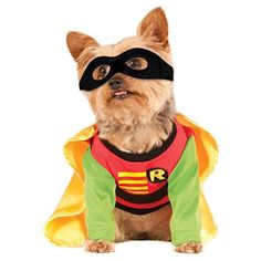 DC Robin Pet Costume (Medium) ** Be sure to check out this awesome product. (This is an affiliate link) #BatmanAndRobincostumes