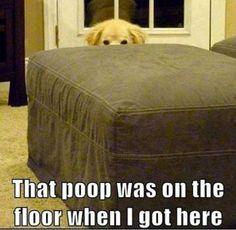 Dog Gone Funny   oh-oh dog gone it!   Funny Bone ticklers