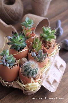 多肉植物って可愛い♥ : flower living