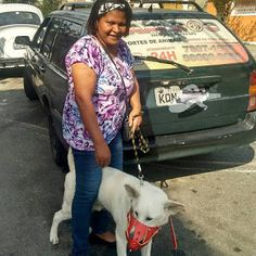 TAXI DOG MONTANHA TRANSPORTE DE ANIMAIS NO RIO DE JANEIRO: ZÉLIA e Toff09/10/2015 -- Olha a nossa cliente, do...