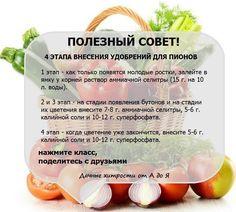 Дачные хитрости Garden Plants, House Plants, Small Farm, Flora, Photo Wall, Backyard, Fruit, Vegetables, Gardening