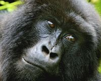 Virunga National Park in the Democratic Republic of Congo is a World Heritage Site and one of the most biologically diverse areas in the world. It offers refuge to critical populations of the less than 1,000 mountain gorillas remaining in the world.But despite its priceless ecological importance, oil companies are fighting to enter Virunga for oil exploration and extraction. To drill in this park would not only threaten wildlife, negatively impact the ecosystem and jeopardize the mountain…