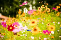 I wish I lived in the country where I could have an entire meadow filled with flowers like these.