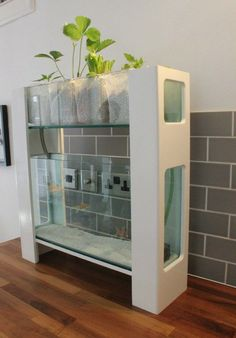 Indoors aquaponic system appropriate for apartments or small homes. Goes to show you can grow your own food anywhere. http://www.pinterest.com/greenhousesuk/
