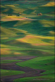 Palouse Wheat Fields - Washington State