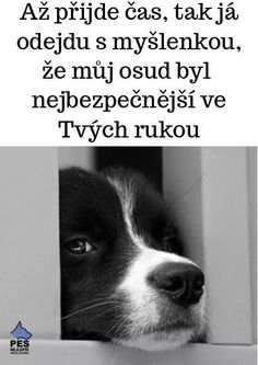 Good To Know, Animals And Pets, Wisdom, Humor, Memes, Dogs, Quotes, Pets, Quotations