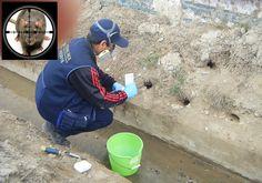 Tratamiento de madrigueras con Fosfamina (Sólo en exteriores!)  Rat burrow treatment - Phosphine (Outdoor only!)