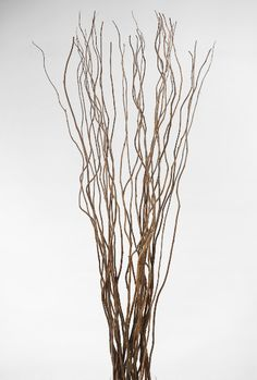 """Natural Curly Willow 27-30"""" Branches (11 branches/ bunch) $3.99 bunch/ 3 bunches $2.89 bunch"""