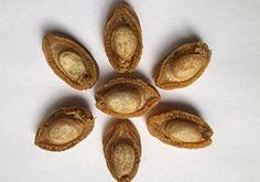 fruits de mer séchés de grande taille ormeaux 100 grammes…