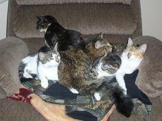 Mom, Angel, Callie, Tiger and Brindley