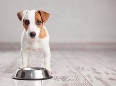 Come e quanto dare da mangiare ai cani: 10 errori da evitare sempre