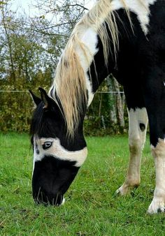 All The Pretty Horses, Beautiful Horses, Animals Beautiful, Rare Horses, Wild Horses, Rare Horse Colors, Animals And Pets, Cute Animals, Types Of Horses