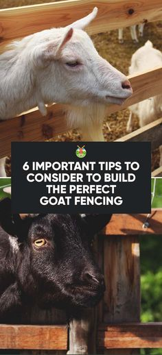 Goat Fencing: 6 Important Tips to Consider to Build the Perfect Fence
