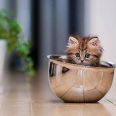 Acho q vi uma Gatinha! by #sony #japan - @preda2005- #webstagram