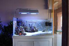 Rimless Aquarium Club - Page 37 - Reef Central Online Community Aquarium Garden, Aquarium Landscape, Home Aquarium, Aquarium Design, Reef Aquarium, Planted Aquarium, Saltwater Aquarium Fish, Saltwater Tank, Nano Reef Tank