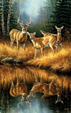 This Whitetail Reflections Whitetail Deer Wrapped Canvas Art is the perfect gift for the avid hunter and animal lover alike. It features 3 whitetail deer in front of a water source showing their refle Wildlife Paintings, Wildlife Art, Animal Paintings, Animal Drawings, Landscape Paintings, Drawing Animals, Deer Paintings, Original Paintings, Vida Animal