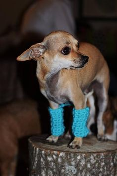 doggie leg warmers.... my first thought is where are the animal rights activists when you need 'em?