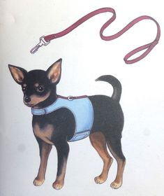 Posts about dog carrier written by sewchet Dog Pouch, Dog Bag, Dog Carrier Purse, Pet Sling, Dog Expressions, Puppy Images, Dog Items, Animal Projects, Old Dogs