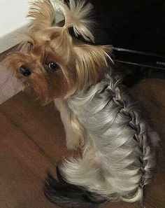 French braid can be done on anyone who has enough hair and patience!!!! :)))) This rocks my world, has to be one of favorite pins ever!