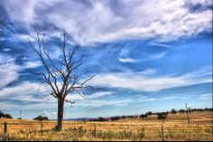 This beautiful sight was captured nearby the Cowra Prisioner of War Camp.   #nature  Photographer: aussiegall Website: http://flickr.com/photos/aussiegall/2104652119/