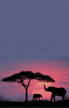 African sunset   RePinned by : www.powercouplelife.com
