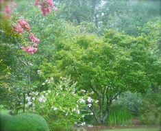 How to CombinePlants - Journal - Deb's Garden Blog