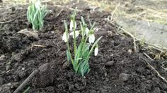 De kippen, eenden en ganzen hebben het voorjaar in de bol en zijn al druk bezig met de volgende generaties. Maar ook de eerste planten laten zich weer zien!