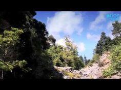 #Evia - Kerasia Greek Flowers, Forest Mountain, Tree Forest, Flowering Trees, Lush Green, Forests, Greece, Island, Mountains