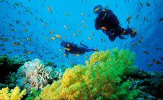 mergulho no Brasil fotos - Pesquisa Google