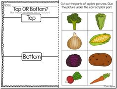 tops and bottoms activity with taste test