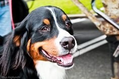 Can Pets Help Reduce Stress? - http://holisticpain.com/can-pets-help-reduce-stress/