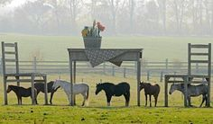 Horses stand in the shadows of a gigantic wooden table and two chairs during mild autumnal weather in a meadow near Dollstadt, central Germany. Local wood designer Jens Braun created these enormous pieces of furniture to serve as shelter for his horses.