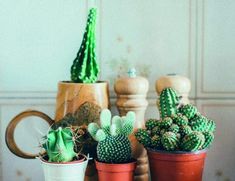 Marta Malheiro, Author at Revista Jardins - Página 3 de 5 Indoor Cactus Plants, Cactus House Plants, Exotic Plants, All Plants, Cactus Decor, Small Cactus, Cactus Flower, Cactus Care, Cacti And Succulents