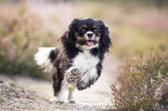 Run! - More dog pictures: https://www.facebook.com/SnapDogPL/