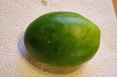 Mr. Greens Welt: Mango Kent - Vom Kern zur Pflanze