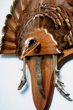 1000 images about taxidermy on pinterest turkey call for Turkey fan mount template
