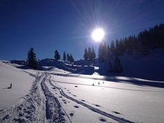 Perfect skitouring day in the alps. We even found great powder on the way down! Way Down, Alps, Powder, Mountains, Nature, Travel, Naturaleza, Viajes, Face Powder